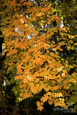 Photograph - Fall Leaves 2 Autumn Leaf Colors Art by Reid Callaway
