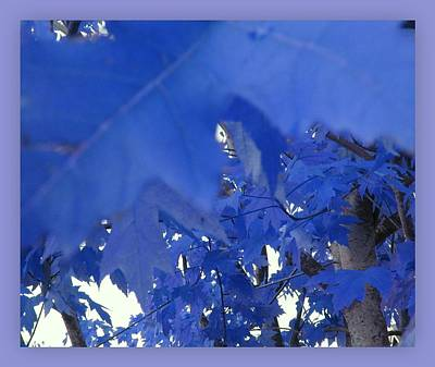 Photograph - Fall Leaves #7 by Anne Westlund