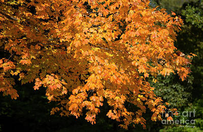 Photograph - Fall Leaves 8 Autumn Leaf Colors Art by Reid Callaway