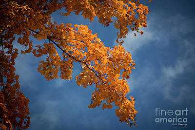 Photograph - Fall Leaves 9 Autumn Leaf Colors Art by Reid Callaway