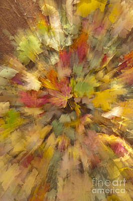 Photograph - Fall Leaves Abstract by Sandra Bronstein