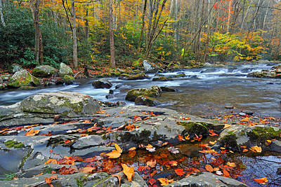 Photograph - Fall Leaves Along Big Creek by Alan Lenk