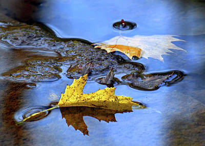 Photograph - Fall Leaves Along The Creek by Carolyn Derstine