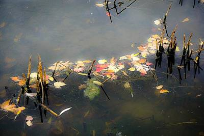 Photograph - Fall Leaves And Broken Reeds by Desmond Raymond