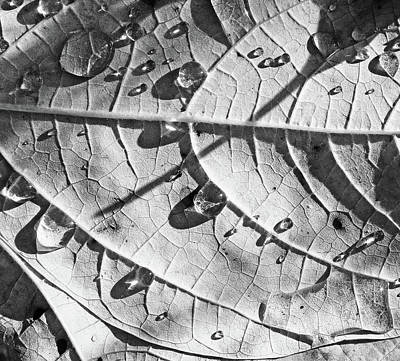 Photograph - Fall Leaves And Dew 13 2017 Bw by Mary Bedy