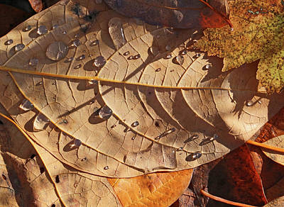 Photograph - Fall Leaves And Dew 14 2017 by Mary Bedy