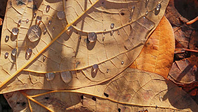 Photograph - Fall Leaves And Dew 5 2017 by Mary Bedy