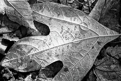 Photograph - Fall Leaves And Dew 7 2017 Bw by Mary Bedy