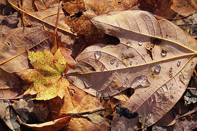 Photograph - Fall Leaves And Dew 9 2017 by Mary Bedy