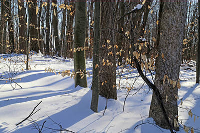 Photograph - Fall Leaves And Snow Shadows 021218 by Mary Bedy