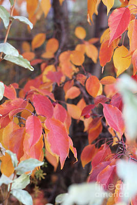 Photograph - Fall Leaves As Is by Donna Munro