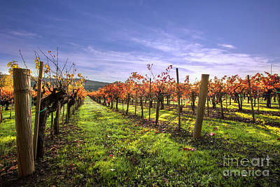 Fall Leaves At The Vineyard Art Print by Jon Neidert
