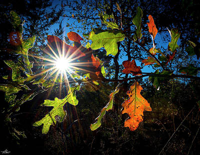 Photograph - Fall Leaves At Tyler State Park by Phil Rispin