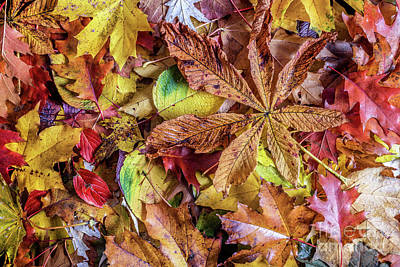 Border Photograph - Fall Leaves Background. Colorful Autumn Background. by Michal Bednarek