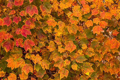Photograph - Fall Leaves Background by Terry DeLuco