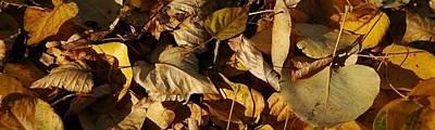 Photograph - Fall Leaves by Bill Kellett