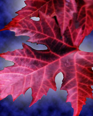 Digital Art - Fall Leaves  by Cathy Beharriell