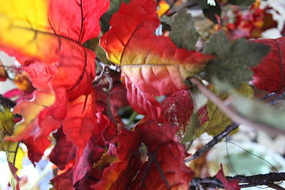 Photograph - Fall Leaves Design 4 by Sheri Dean
