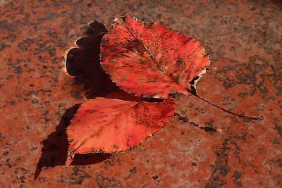 Fall Leaves Floating Art Print