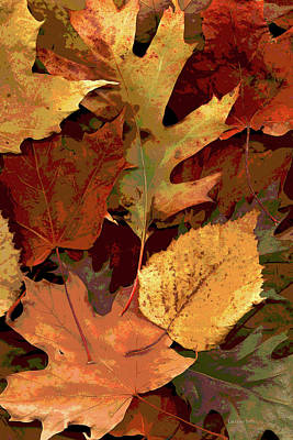 Riverstone Gallery Photograph - Fall Leaves by Gregory Steele