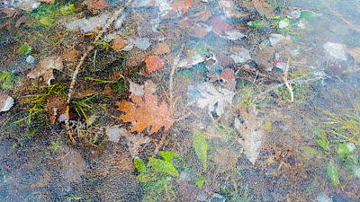Photograph - Fall Leaves In A Frozen Puddle by Lynn Hansen