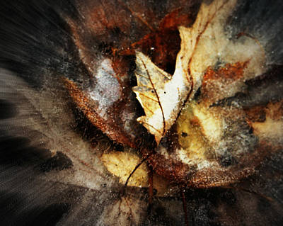 Photograph - Fall Leaves In Ice by Kathy M Krause
