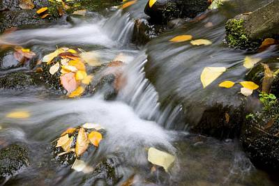Fall Leaves In Rushing Water Art Print by Craig Tuttle
