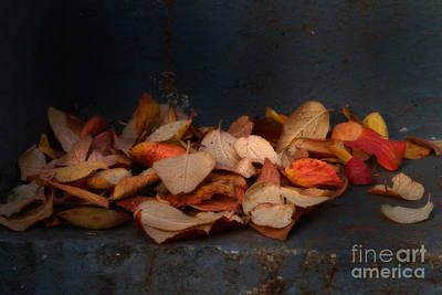 Photograph - Fall Leaves by Jim Crawford