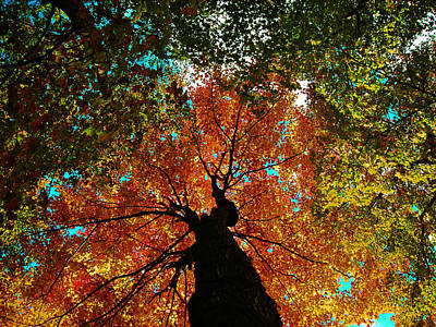 Photograph - Fall Leaves by Juergen Weiss