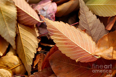 Photograph - Fall Leaves by Karen Adams