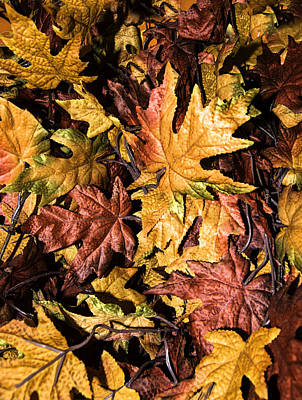 Photograph - Fall Leaves by Leticia Latocki