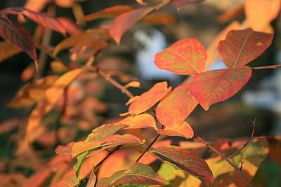Fall Leaves Art Print by Linda Ebarb