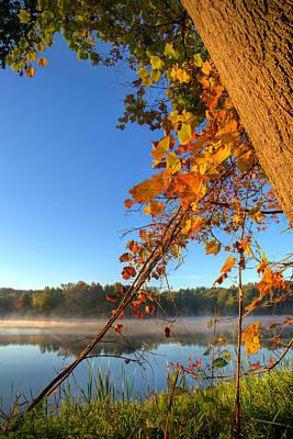 Fall Leaves Art Print by Mark Hammerstein