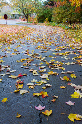 Photograph - Fall Leaves by Michael Tesar