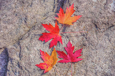 Digital Art - Fall Leaves On Rock by Randy Steele