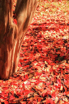 Photograph - Fall Leaves On The Ground by Jill Lang