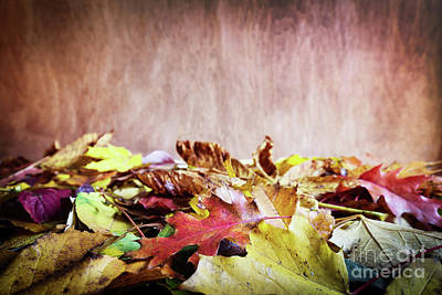 Copy Photograph - Fall Leaves On Wooden Background. Colorful Autumn by Michal Bednarek