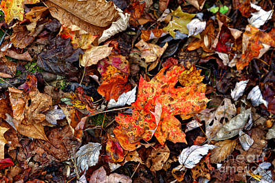 Photograph - Fall Leaves One by Paul Mashburn
