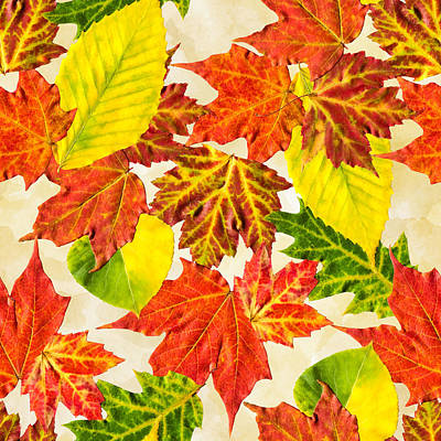 Maple Leaf Art Mixed Media - Fall Leaves Pattern by Christina Rollo