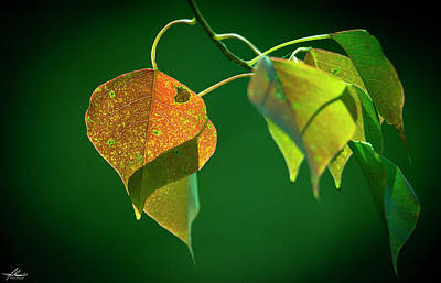 Photograph - Fall Leaves by Philip Rispin