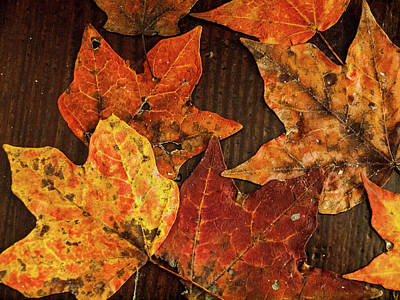 Photograph - Fall Leaves by Randy Sylvia