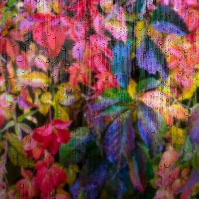 Photograph - Fall Leaves Through Rainy Window by John Brink