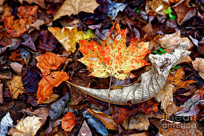 Photograph - Fall Leaves Two by Paul Mashburn