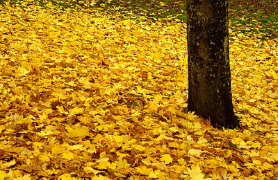 Fall Leaves Art Print by Val Jolley