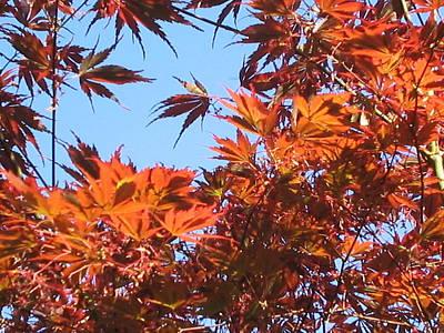 Fall Leaves Art Print by Valerie Josi