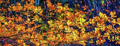 Photograph - Fall Light #e2 by Leif Sohlman