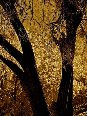 Ojai Wall Art - Photograph - Fall Light In The Meadow by Liz Vernand