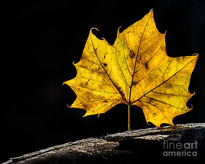 Photograph - Fall Light by Michael Arend