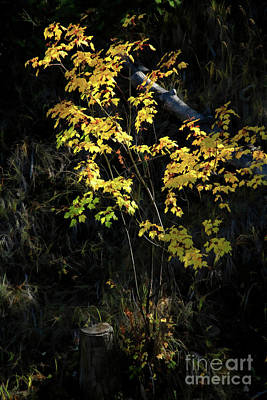 Photograph - Fall Light by Roland Stanke