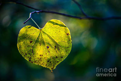Photograph - Fall Light Through The Trees by Michael Arend